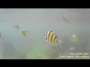 Наблюдение за рыбками на пляже Хиккадувы