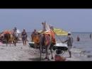 Верблюд, лама и осел на море в Лазурном.