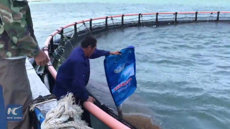 Самая большая оффшорная ферма Китая по разведению рыбы