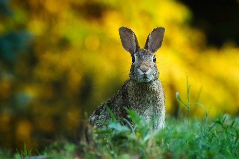 Томич осужден за то, что хотел кормить кроликов коноплей