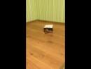 Ириска в пакете