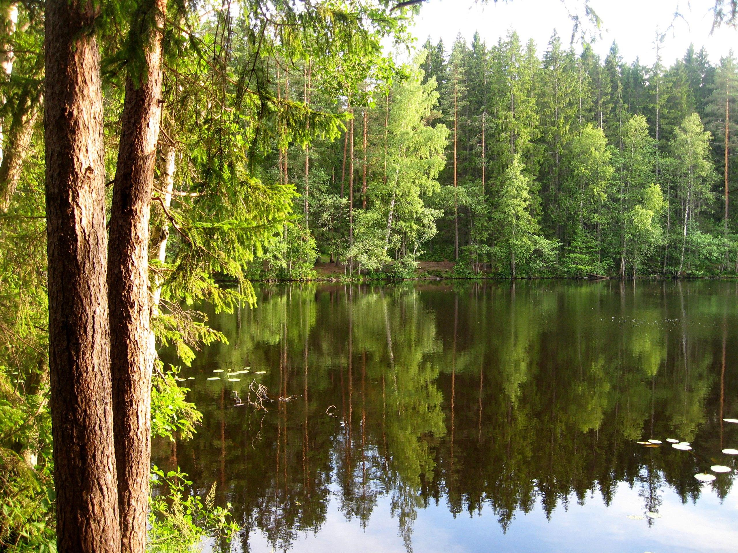 Озеро Долгое, Ленинградская область