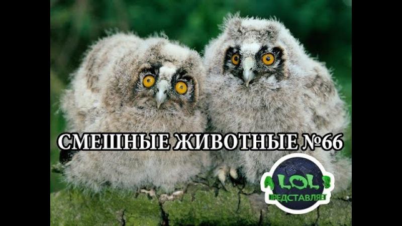 Видео приколы с животными рвут интернет! Грусть меняю на смех! Засмеялся - подпис » Freewka.com - Смотреть онлайн в хорощем качестве