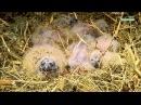 Странствия совы Совиная одиссея