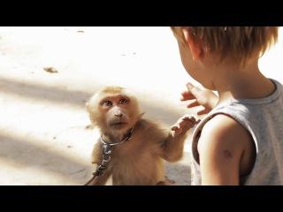 Empathetic Meeting - Monkey and Boy