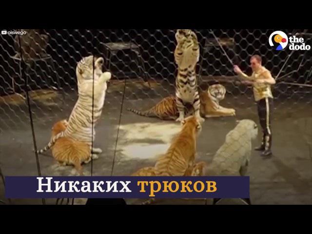 Эмоции животных, которые вышли на свободу из цирка / Русские субтитры HD