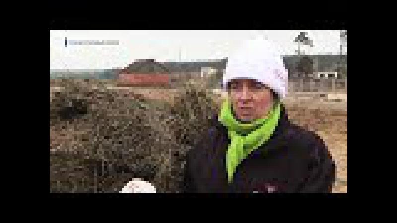 Во Владимирской области для разведения ангусов выбрали бывший колхоз Рассвет