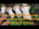 Поход в лес за грибами опятами 8 сентября 2017 Сибирь тайга природа охота сбор гриб