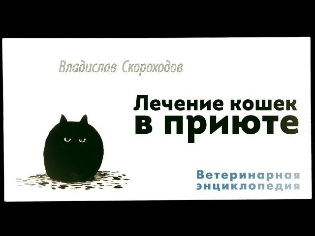 Лечение кошек в приюте