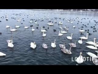 Лебединое озеро, Горный Алтай