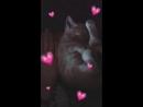 найденый кот