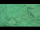 гоняю гигантского кальмара
