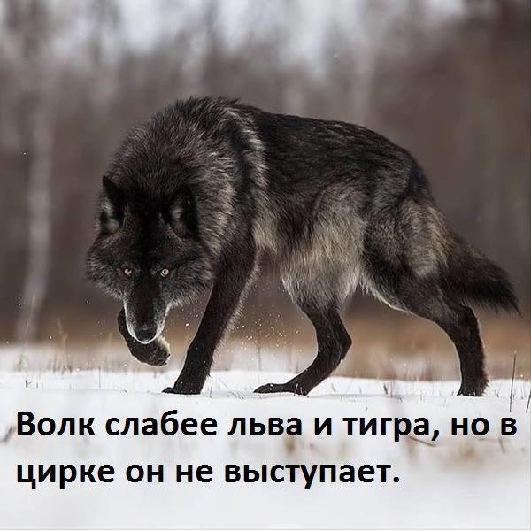 https://pp.userapi.com/c639631/v639631236/61a72/YJaQnVDrdiA.jpg