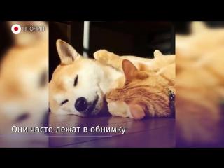 Дружные кот и пес из Японии стали звездами Instagram