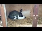 Кролики трахаются