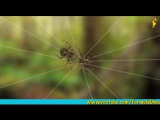 Почему пауки не попадают в свои сети (мультфильмы для умных детей Формула Ума!)