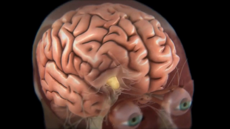 Тело человека. Грани возможного - Человеческий мозг