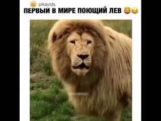 Первый в мире поющий лев