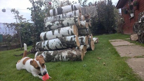 Собакен наш потерялся❗🆘🆘🆘😔😔😔😔 Сегодня днём, в Ногинске, в районе Домож