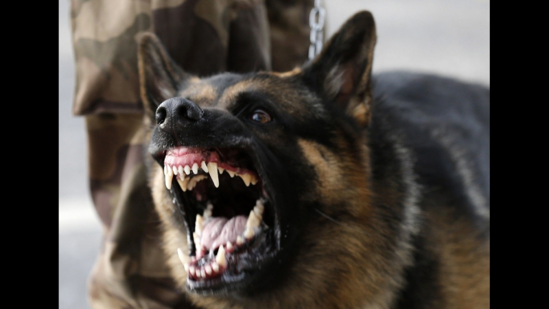 Nevada Cop Commands Dog To Attack Surrendering Suspect