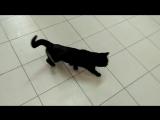 Кошка через 2 месяца после операции (оскольчатый перелом бедра)