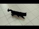 Кошка через 2 месяца после операции оскольчатый перелом бедра
