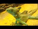 Дракон Змей Ужасное чудовище сотворенное дьяволом. Animals  fish