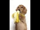 Собачьи радости 4