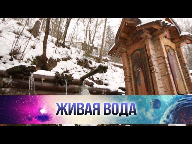 Какие болезни лечит Гремячий ключ под Сергиевым Посадом в Подмосковье