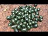 Madagascar- Satisfyingly large pile of emerald pill bugs