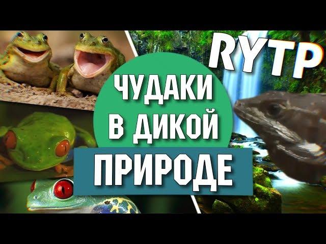 Чудаки в дикой природе   RYTP Collab