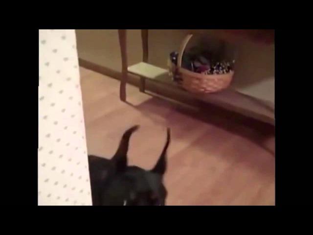 Собака собирается на дачу СМОТРЕТЬ ВСЕМ