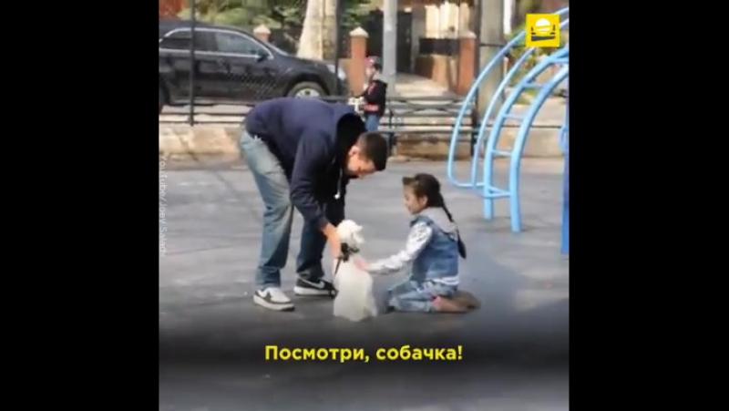 Видео 1015 | Американский блогер проверил, насколько легко похитить ребенка с детской площадки