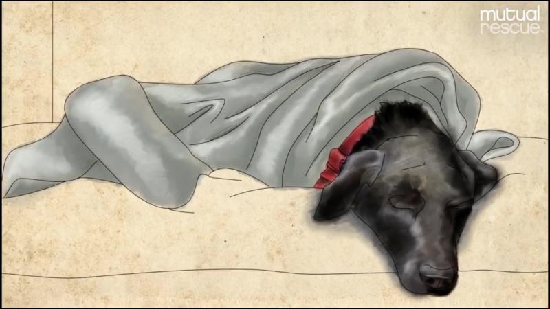 Взаимное спасение_ Трейси и ее собака Джек. Удивительная история исцеления.