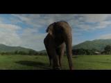 Simone Saragò - Elephant (EDM Melbourne Bounce Video)