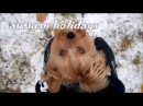 Аutumn holidays agility and tricks Yorkshire terrier Vesta