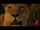 Shanti D - Dangerous E.P. by O.B.F x Bim One Productions   Trailer