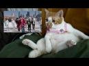CAT REACTION -SEVENTEEN (Don't Wanna Cry)