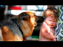 ЖИВОТНЫЕ КОТОРЫЕ СПАСЛИ ЖИЗНЬ ЛЮДЯМ (СОБАКА СПАСЛА ХОЗЯИНА)