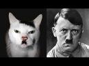 Двойники знаменитостей в мире животных