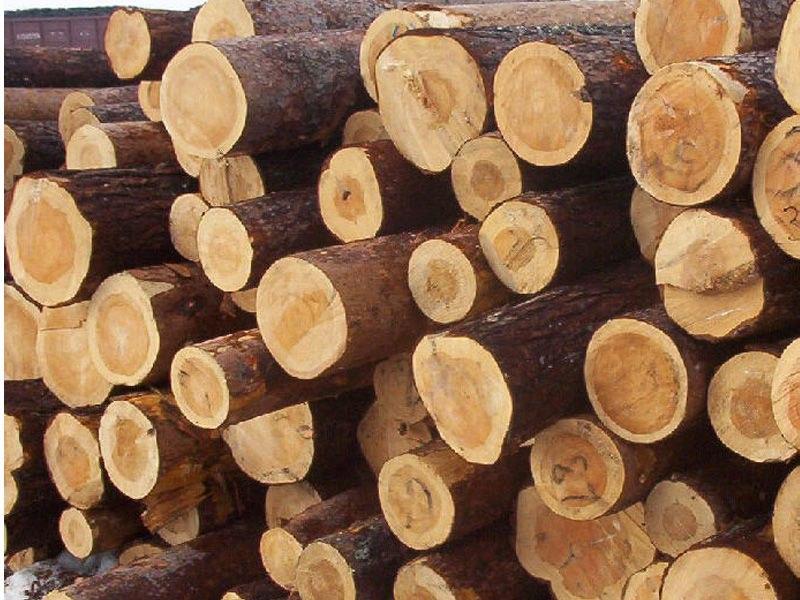 Иностранец вырубил вКалужской области 150 кубометров леса