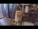 Смешное видео Говорящий кот Валера О тяжелой судьбе котов