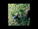 Лесной болван 10