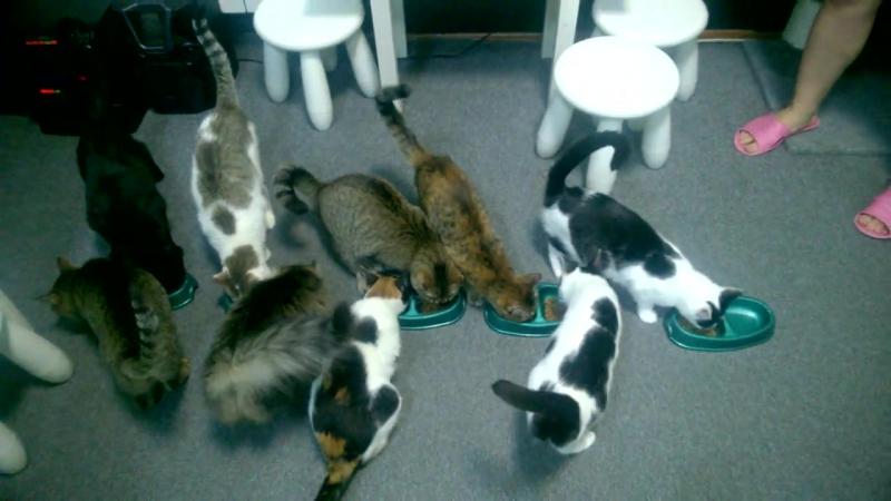 Кормление котиков в Котейне