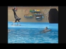 Архипо-Осиповка. Дельфинарий.