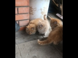 Няшные котятки