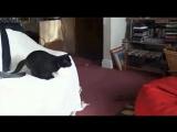 video (3)