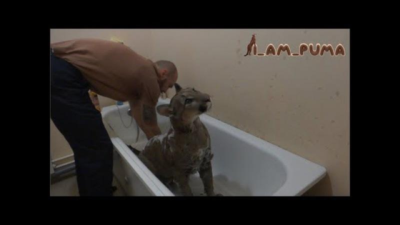 Как помыть пуму Часть 1 СТИРКА How to wash puma Part 1 the WASH