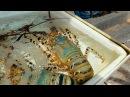 Пхукет 2017. Рыбный рынок на Раваи. Цены на морепродукты. Серфинг на Пхукете?!