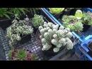 Представяне на моите цветя, моята градина в началото на август 2 от 3